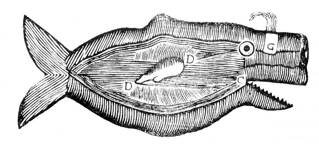 Dibuix d'una balena